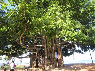 2012年7月25日〜30日ハワイ 066.jpg